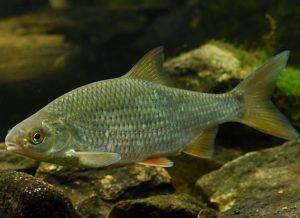 рыбалка на плотву