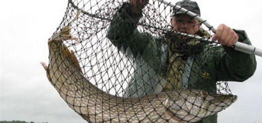 Подсака для рыбалки