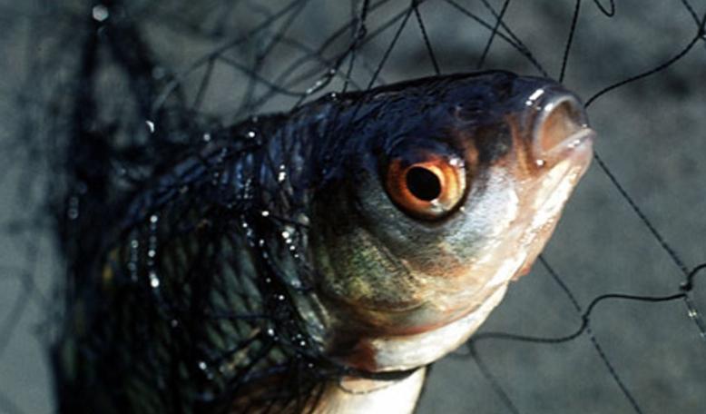 Ловля рыбы екраном