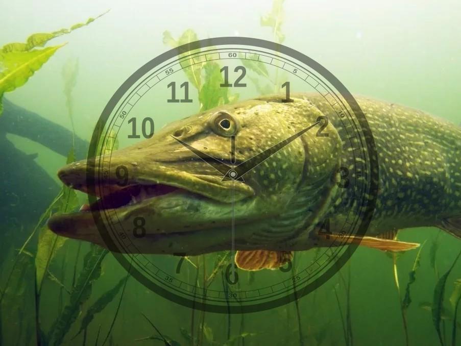 Время для рыбалки